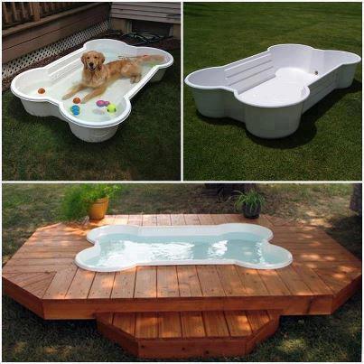Voda v záhrade - Takýto by určite chela moja labradorka Viki. Co uz, dostala sa do zlej rodiny, musi sa uspokojit zo starym bazenikom kupenym na bazosi.