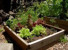 Zeleninová záhradka po novom - Obrázok č. 88