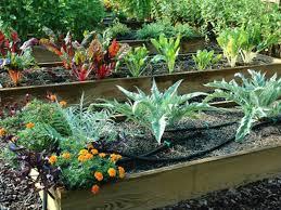 Zeleninová záhradka po novom - Obrázok č. 89