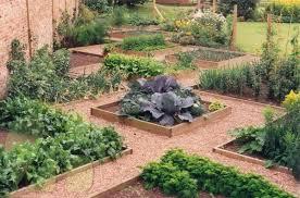 Zeleninová záhradka po novom - Obrázok č. 91