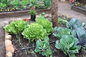 Zeleninová záhradka po novom - Obrázok č. 93