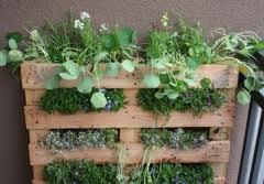 Zeleninová záhradka po novom - Obrázok č. 98