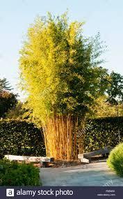 Bambus nesmie chybat. Takyto velky len jeden.
