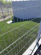 Za dom sme k zadnej branke dali travnikovy koberec, snad sa ujme. Polievame stale.