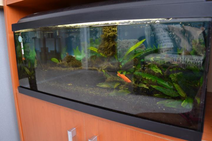 Náš sen...náš domov ♥ - nase rybky