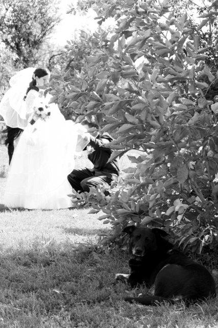 Čo sa do svadobného nevmestilo :) - Obrázok č. 19