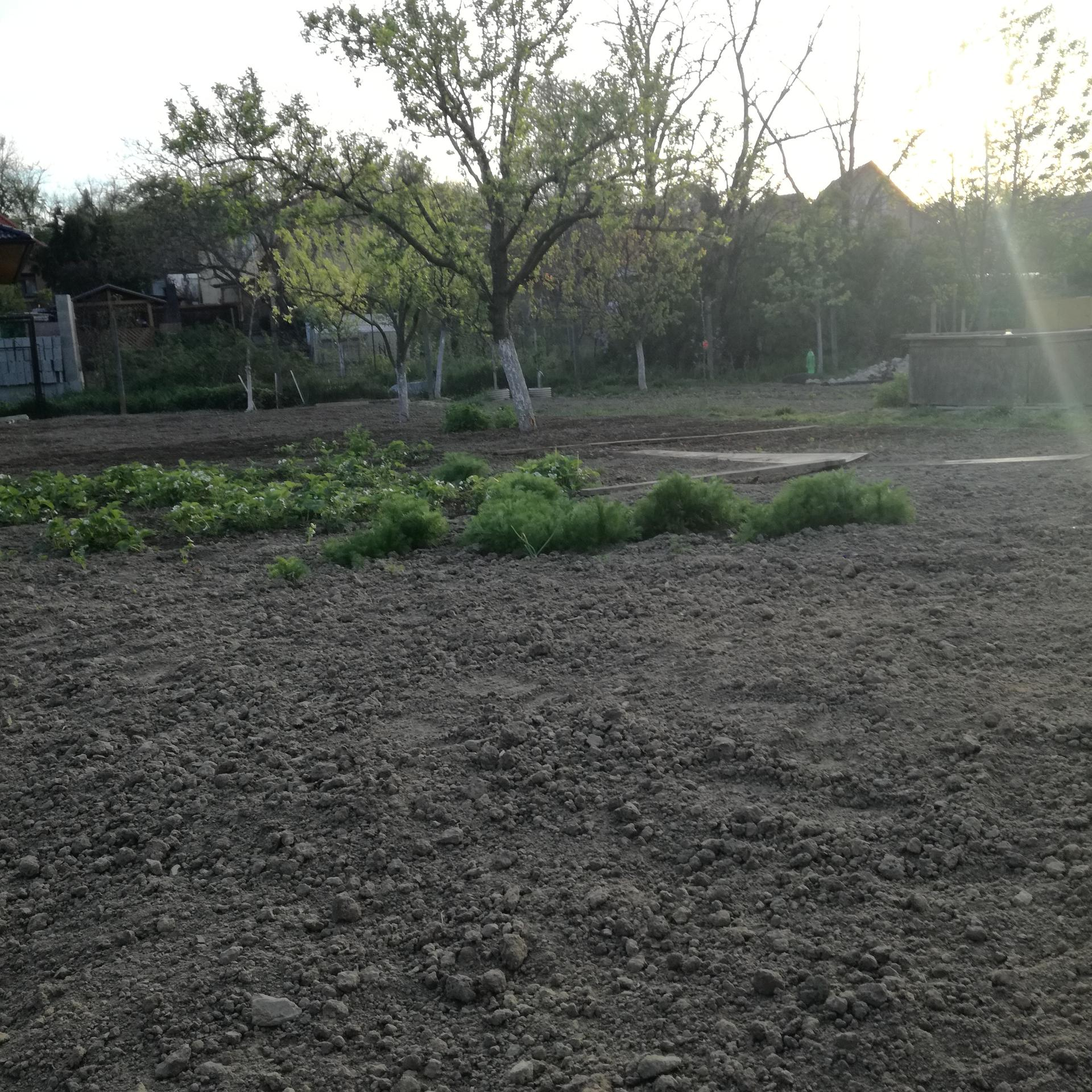 Zahrada 2021 - Obrázok č. 18