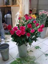 Z těchto růží budu mít kytici, ve skutečnosti jsou tmavší