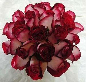 Martina Kresanová & Martin Wenger - nádherná farba ruží a doplniť ich ťahavým brečtanom....