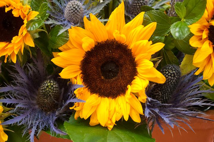 Kathryn beard{{_AND_}}Iain larkin - our self arranged flowers