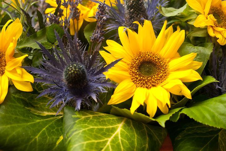 Kathryn beard{{_AND_}}Iain larkin - more sunflowers