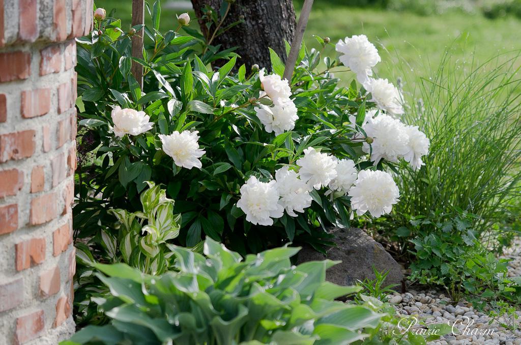 Záhrada a terasa - http://mypieceofvintageprairie.blogspot.sk/