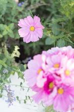 https://mypieceofvintageprairie.blogspot.sk/2017/10/grow-your-own-cutting-garden-with.html