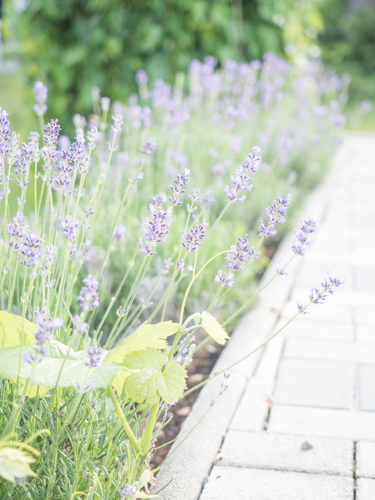 Konečne som napísala o minuloročnej záhradnej sezóne ♥ https://mypieceofvintageprairie.blogspot.sk/2018/01/garden-in-2017-zahrada-v-roku-2017.html - Obrázok č. 1