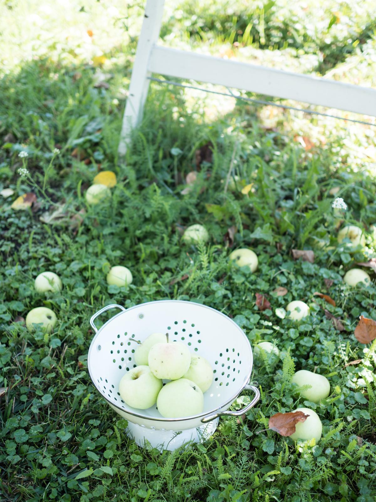 Záhrada a terasa - http://www.prairie-charm.com/2018/08/apple-cookies-jablkove-cookies.html