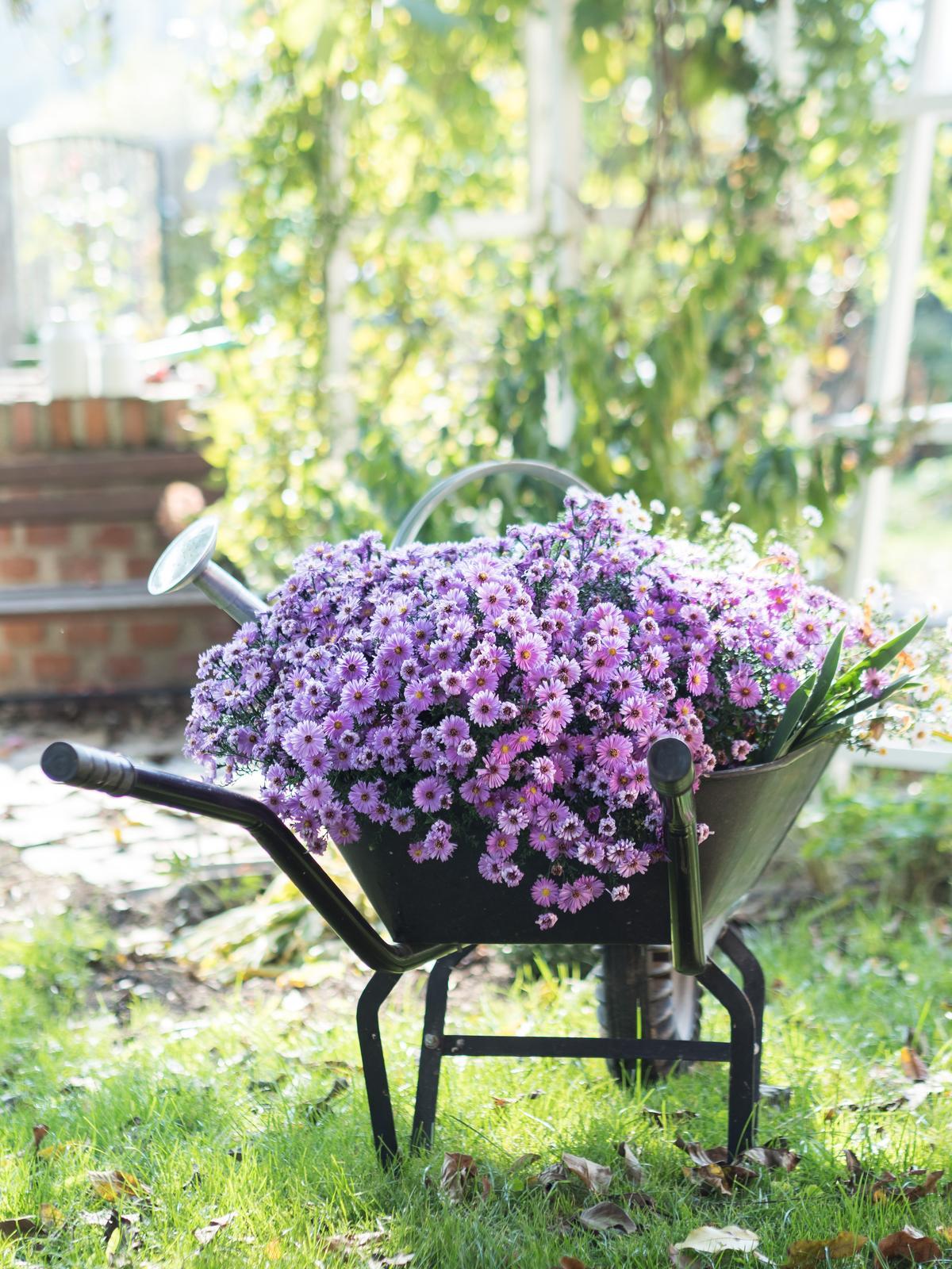 Záhrada a terasa - http://www.prairie-charm.com/2018/10/kvet-mesiaca-astra.html