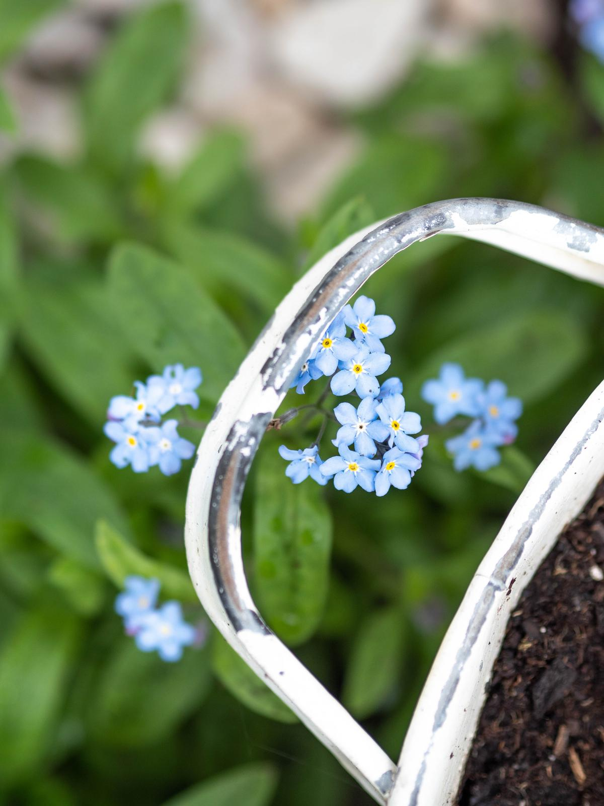 Záhrada a terasa - http://www.prairie-charm.com/2019/05/vsade-same-nezabudky.html