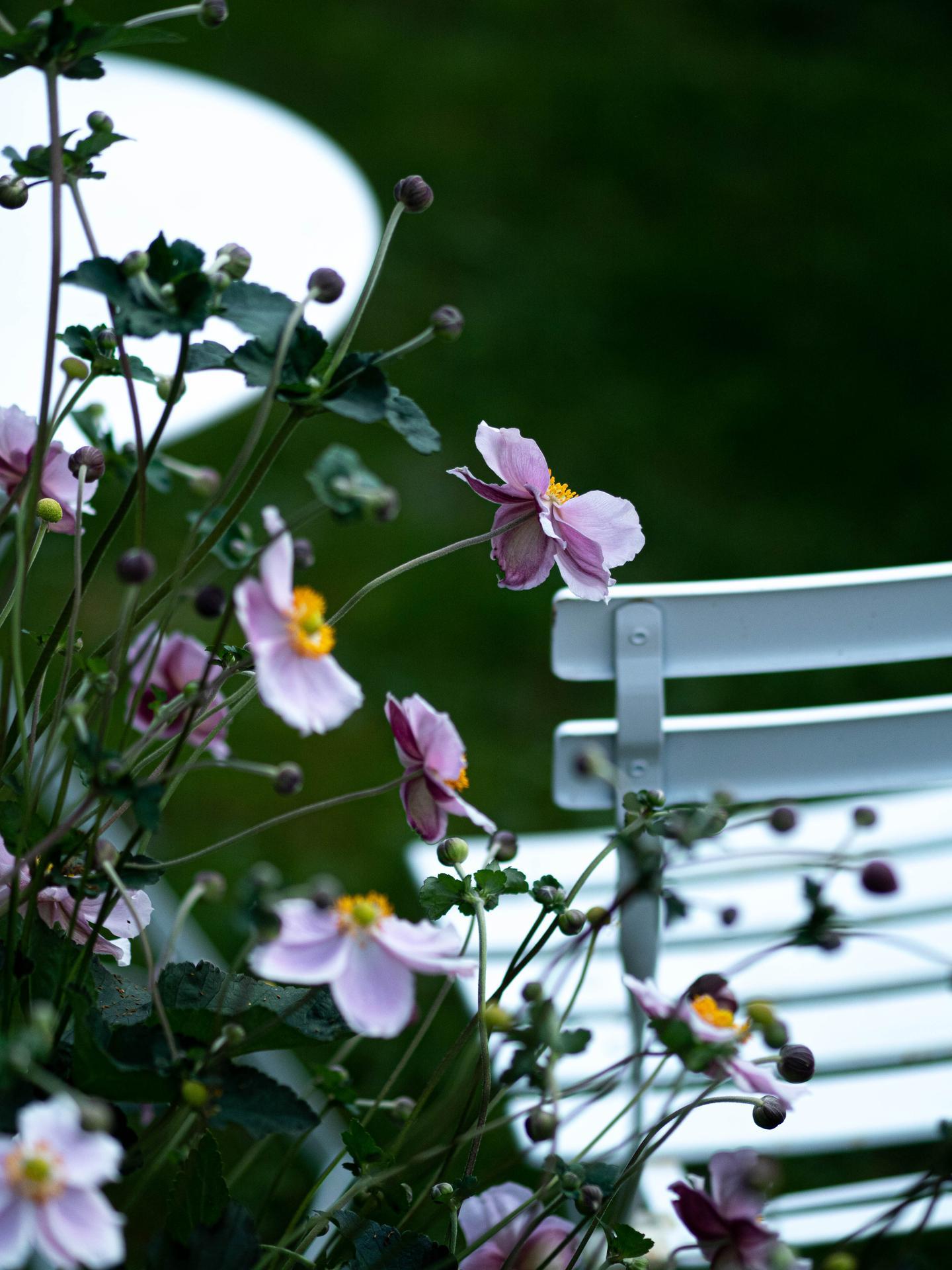 Záhrada a terasa - Obrázok č. 150