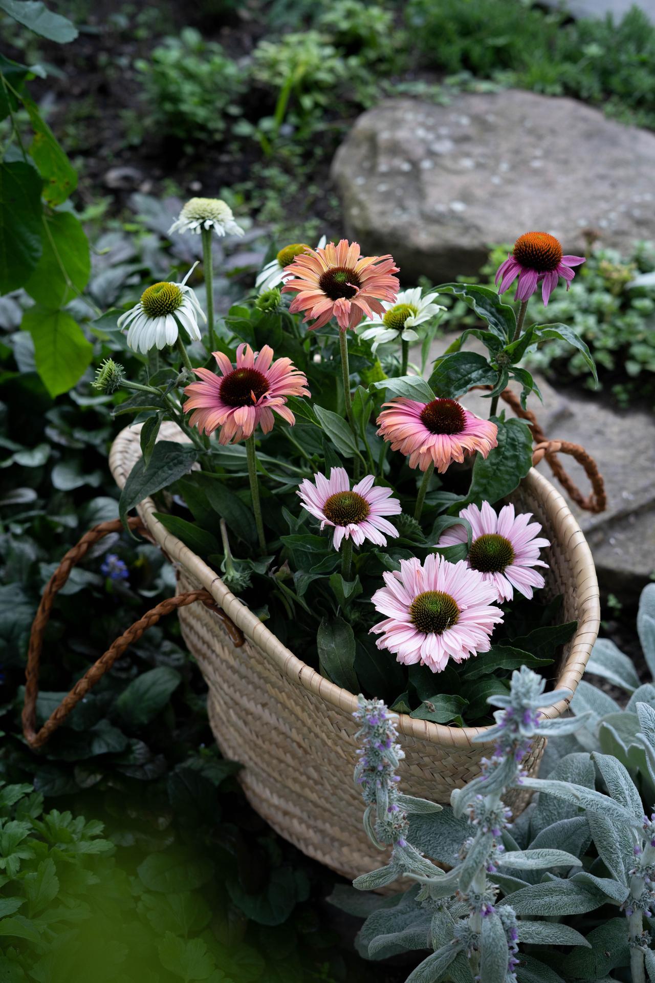 Záhrada a terasa - Obrázok č. 169