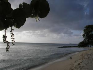 svatební cesta na Barbados