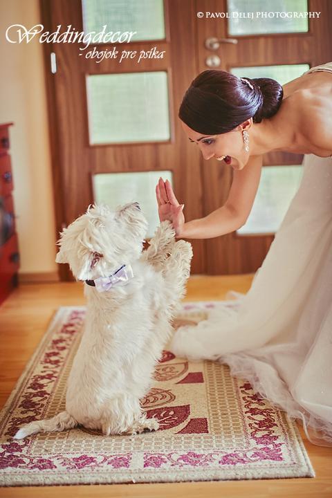 Naše spokojné zákazníčky a naše výrobky :) - Nevesta Janka - jej chlpáčik na svadbe s našim obojkom pre psíkov