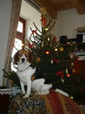 naše psice u stromečku