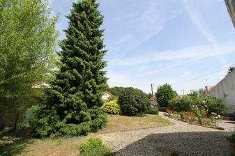 Tento pekny strom zial musel ist dolu :( Stal totiz priamo v nasej pristupovej ceste.