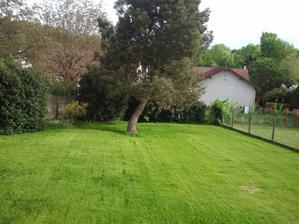 17/05/13 - Nas novy travnik - 1 mesiac od zasiatia semena (a po 2 prvych koseniach). Rastie velmi rychlo, podmienky su idealne.