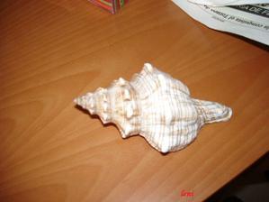 středozemní mušle