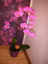 Orchidejka versus tapeta:)