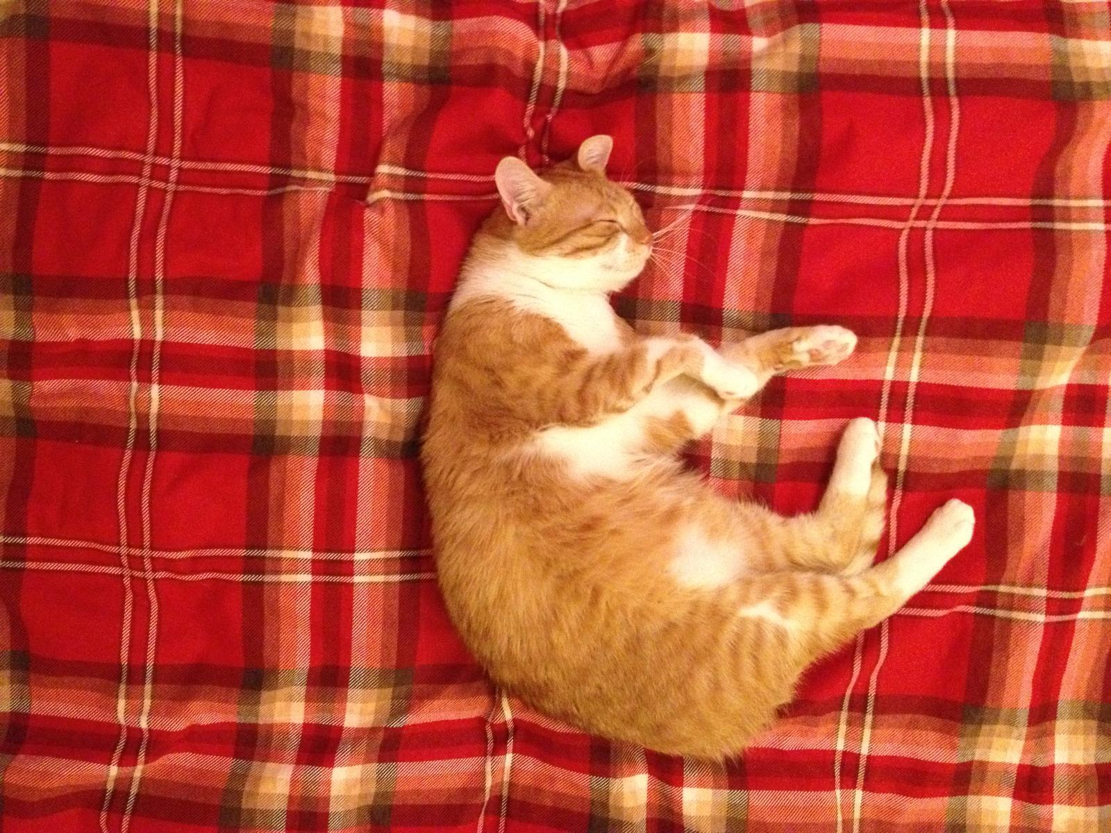 Život nás každodenní... - Maxík ležiaci spiaci.