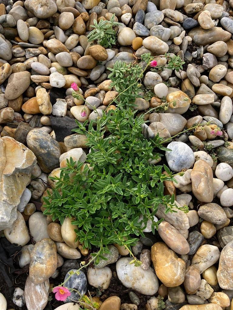 záhrada po dlhšej dobe -nové fotky - Obrázok č. 22