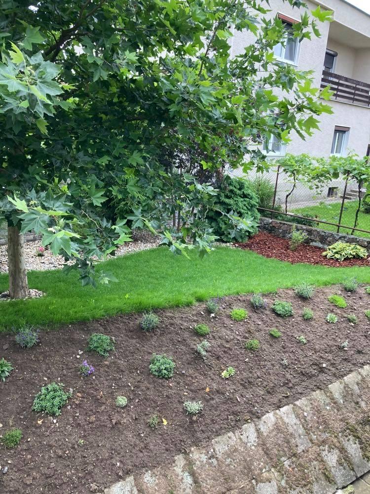 ahojte záhradkári -prosím o radu pred domom máme svah ,minulý rok som tam vysadila skalničky v nádeji ,že sa svah spevní ale treba ho odburiňovať a zem hrozne padá dolu ,viete mi poradiť ako by som vedela svah spevniť? Ďakujem pekne - Obrázok č. 2