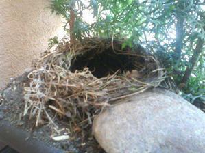 25.5 si u nas začal stavať hniezdo drozdík