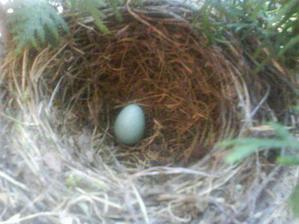 27.5 naložil prvé vajíčko