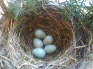 skončilo to 31.5 posledným piatym vajíčkom