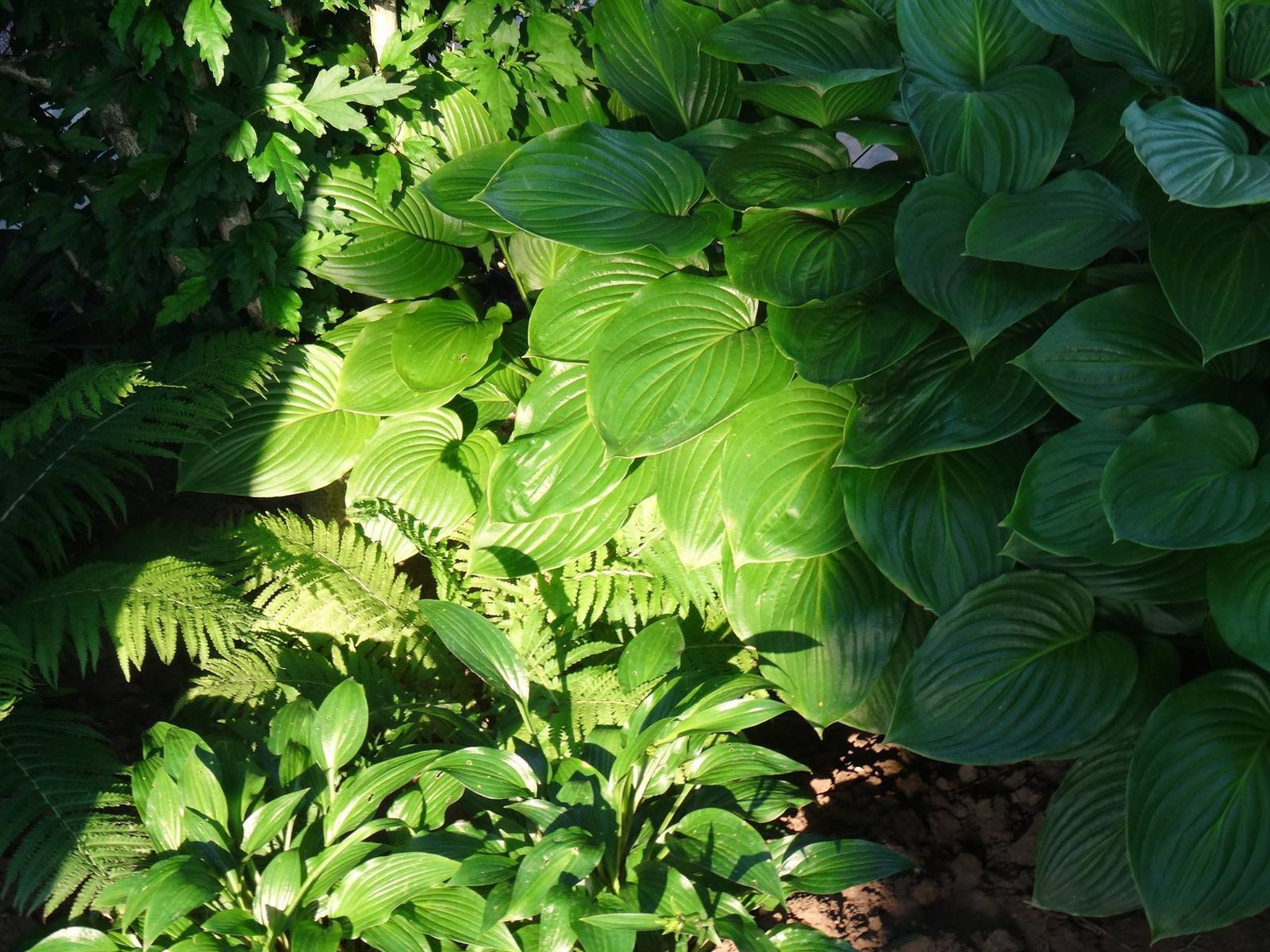 Niečo z našej záhradky - Obrázok č. 5