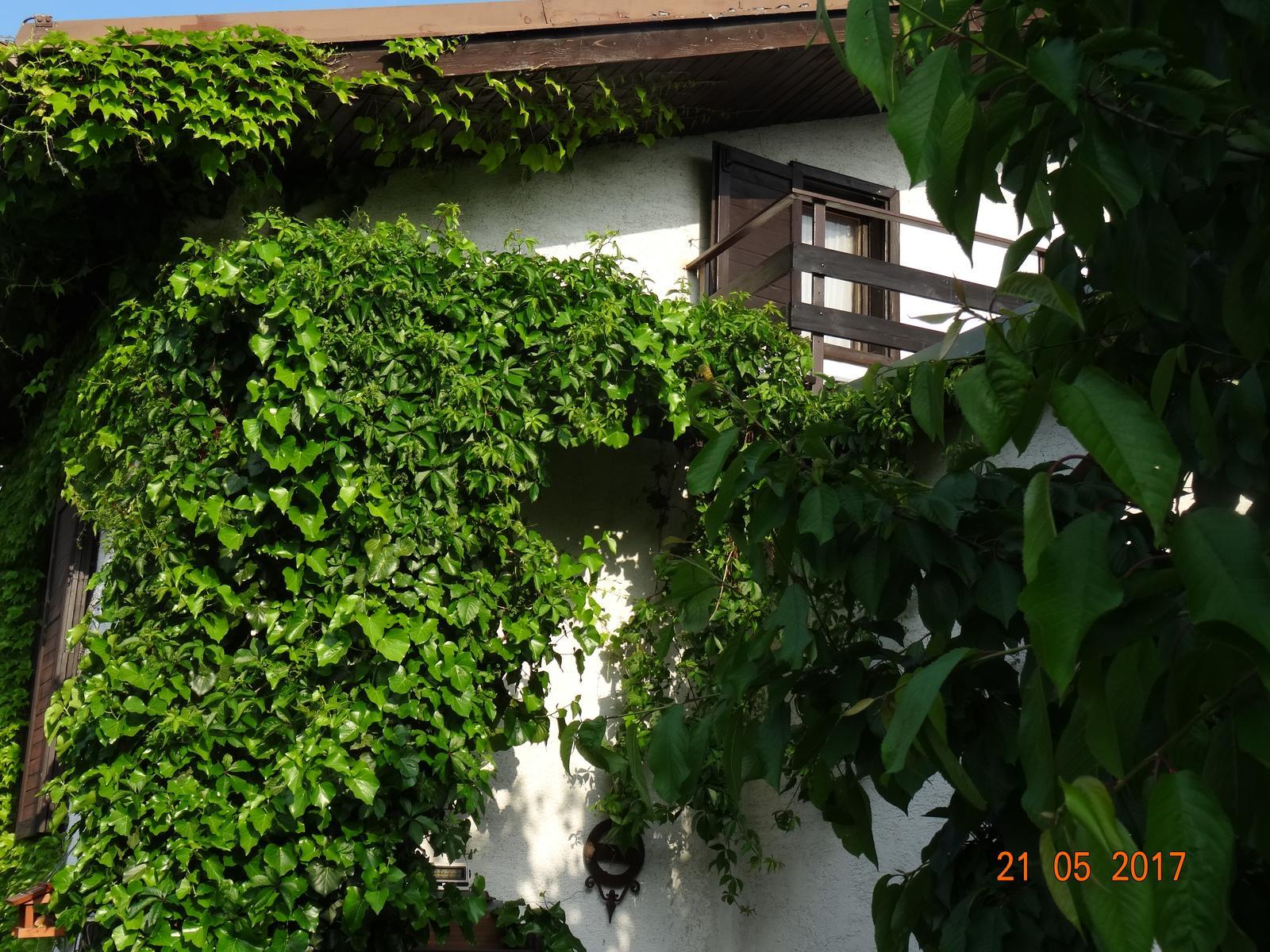 Niečo z našej záhradky - Obrázok č. 1