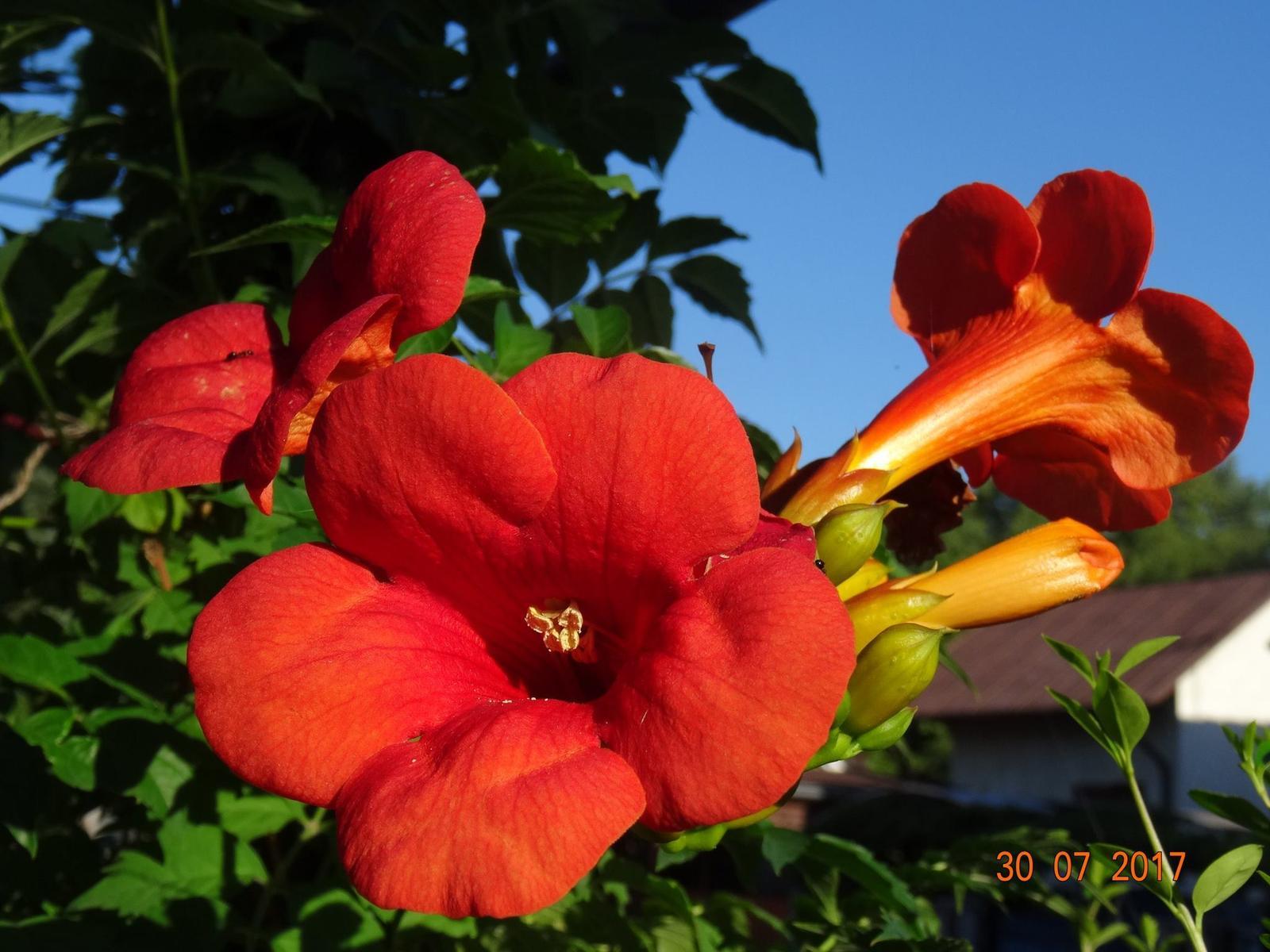 Niečo z našej záhradky - Obrázok č. 7