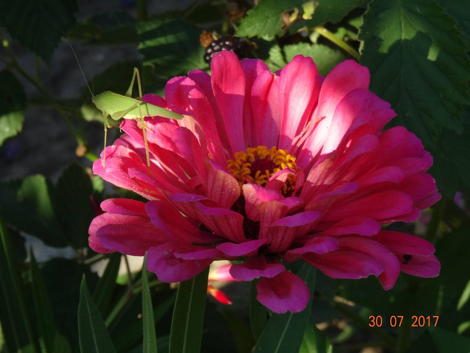 Niečo z našej záhradky - Obrázok č. 10