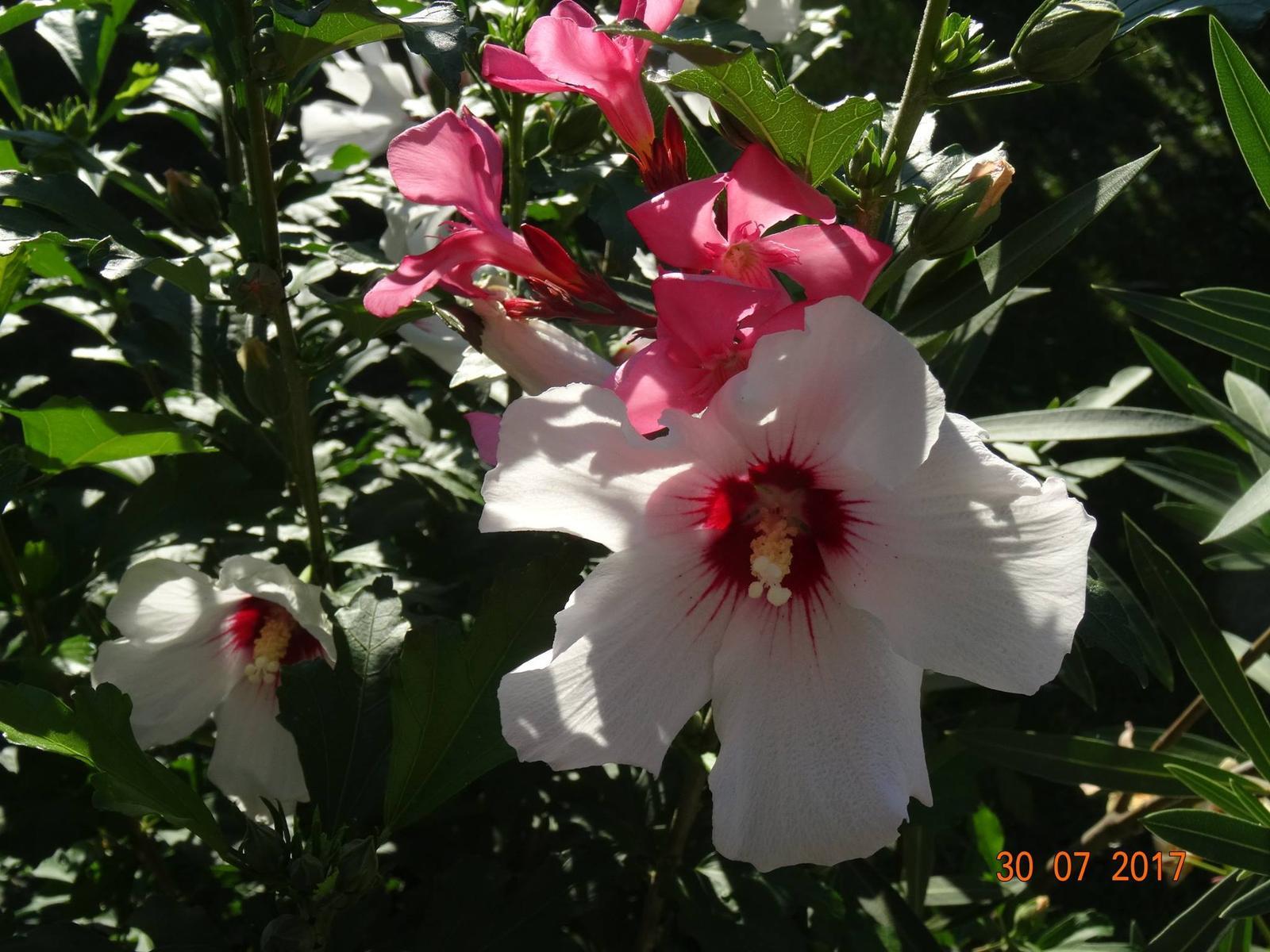 Niečo z našej záhradky - Obrázok č. 9
