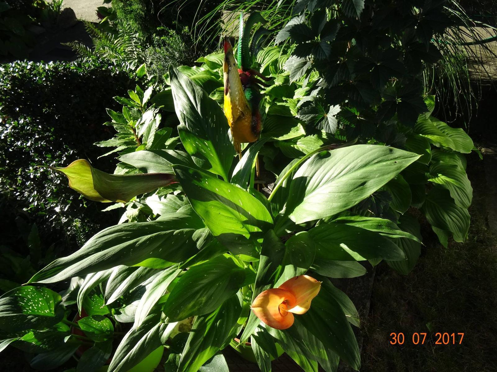 Niečo z našej záhradky - Obrázok č. 8