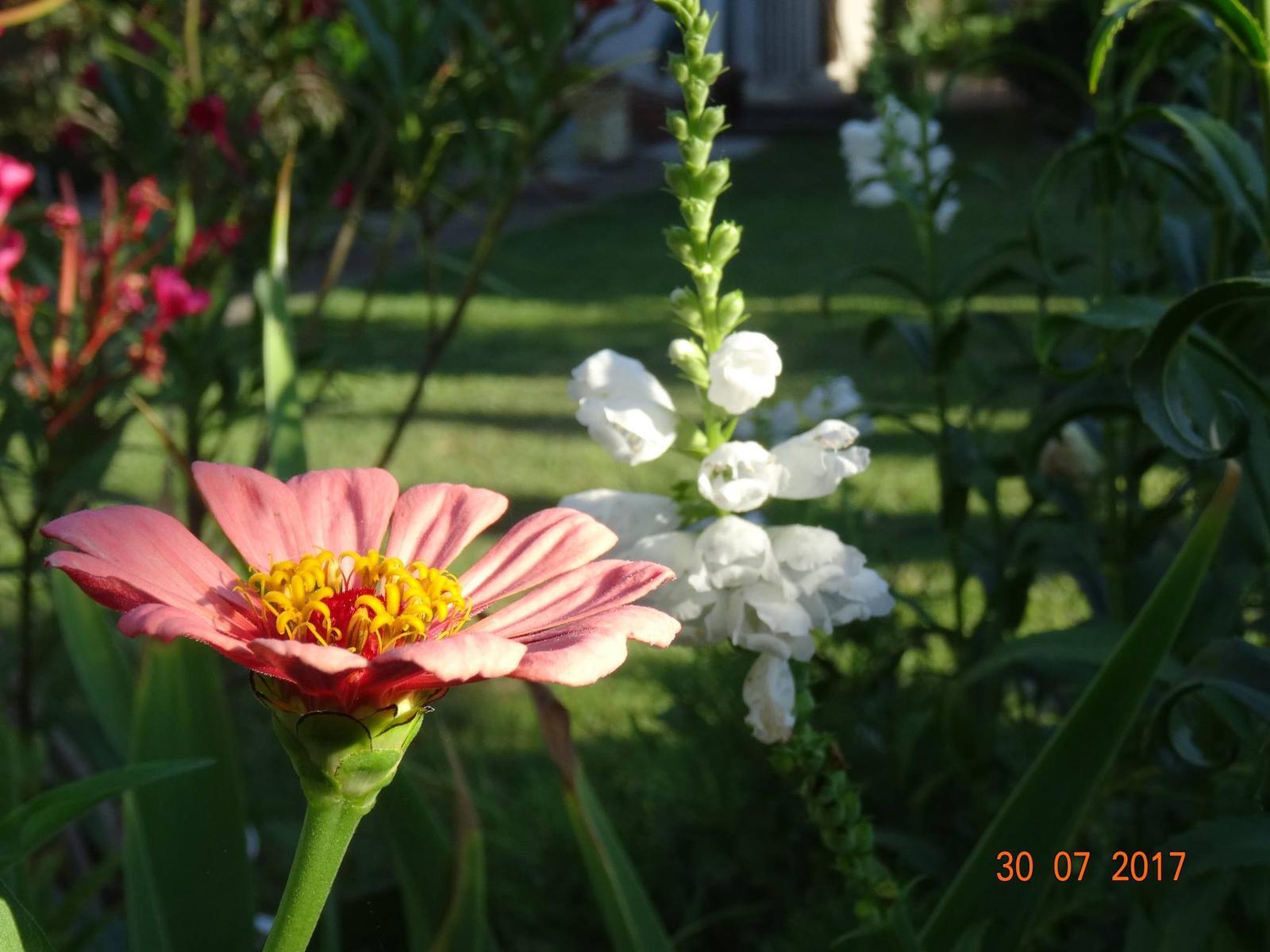 Niečo z našej záhradky - Obrázok č. 13
