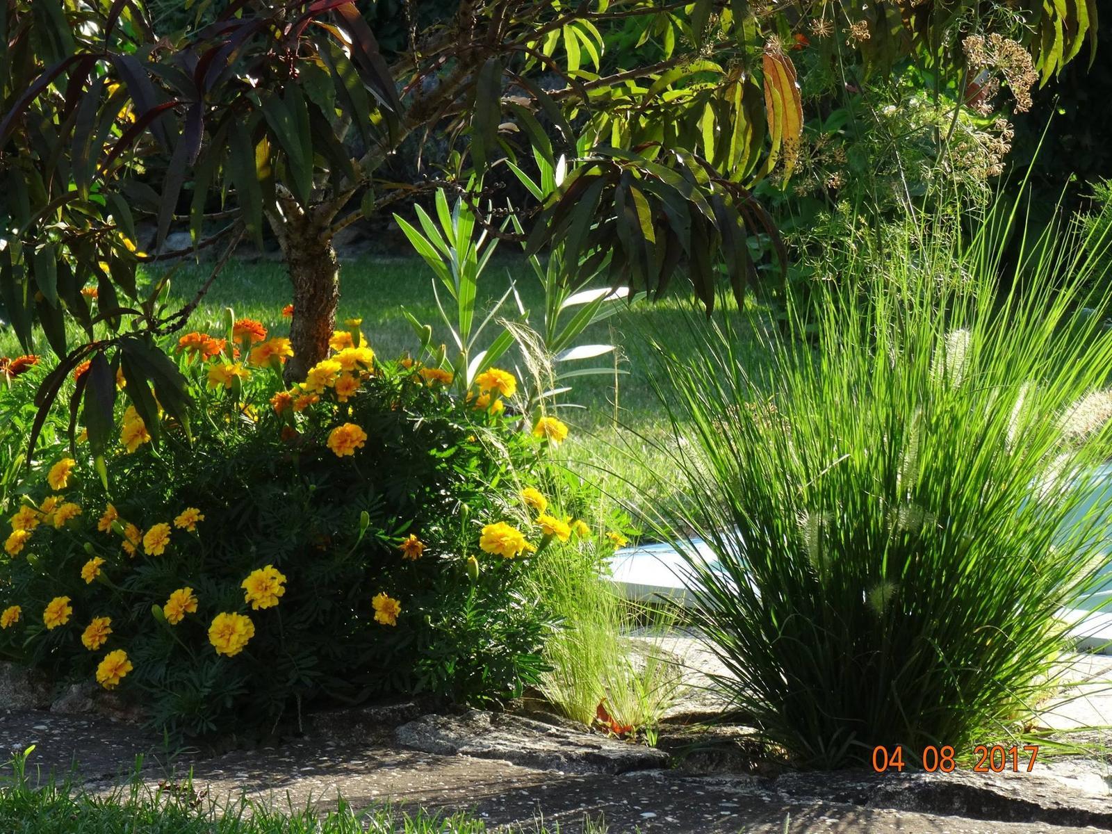 Niečo z našej záhradky - Obrázok č. 20