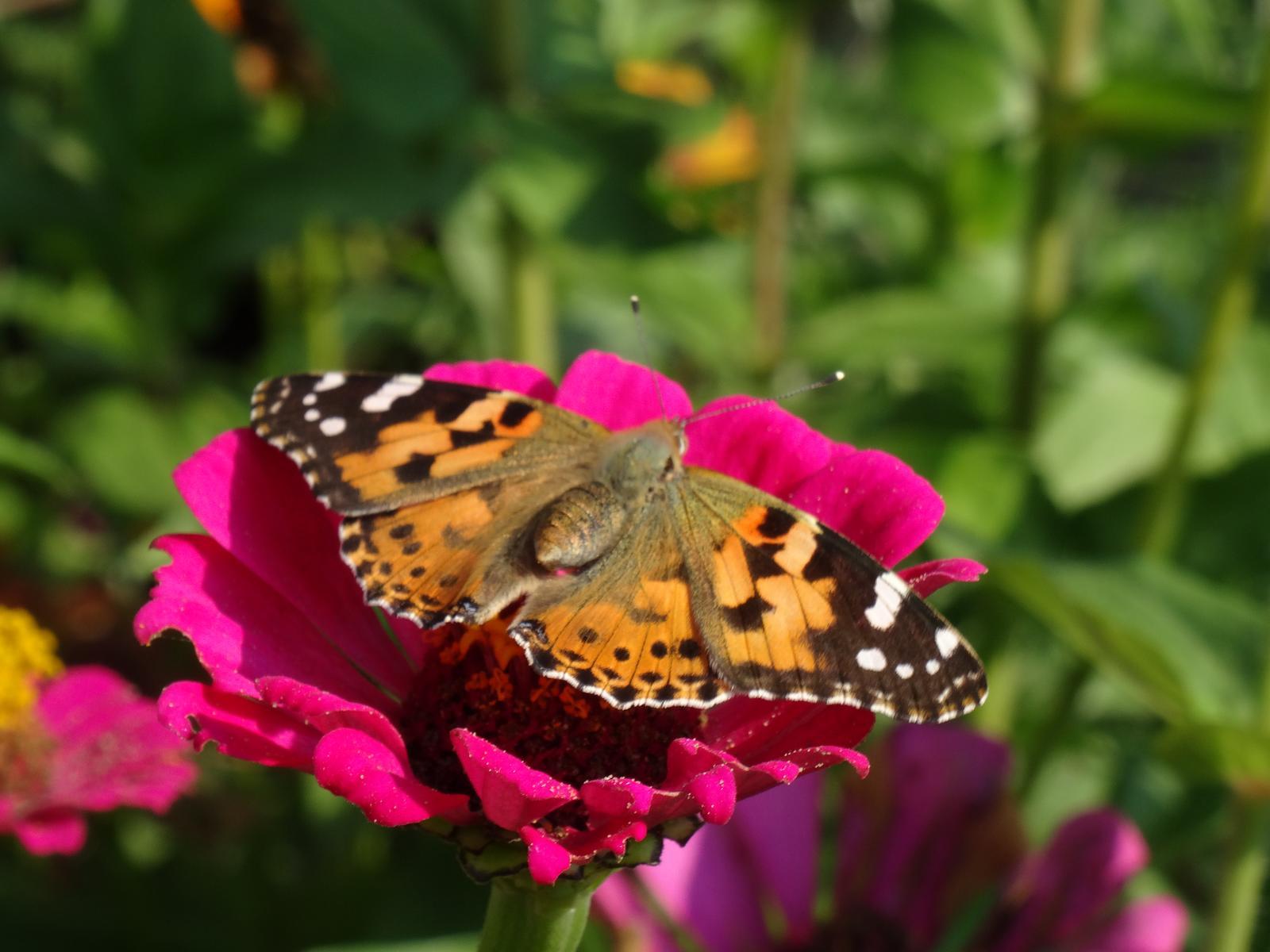 Niečo z našej záhradky - Obrázok č. 23