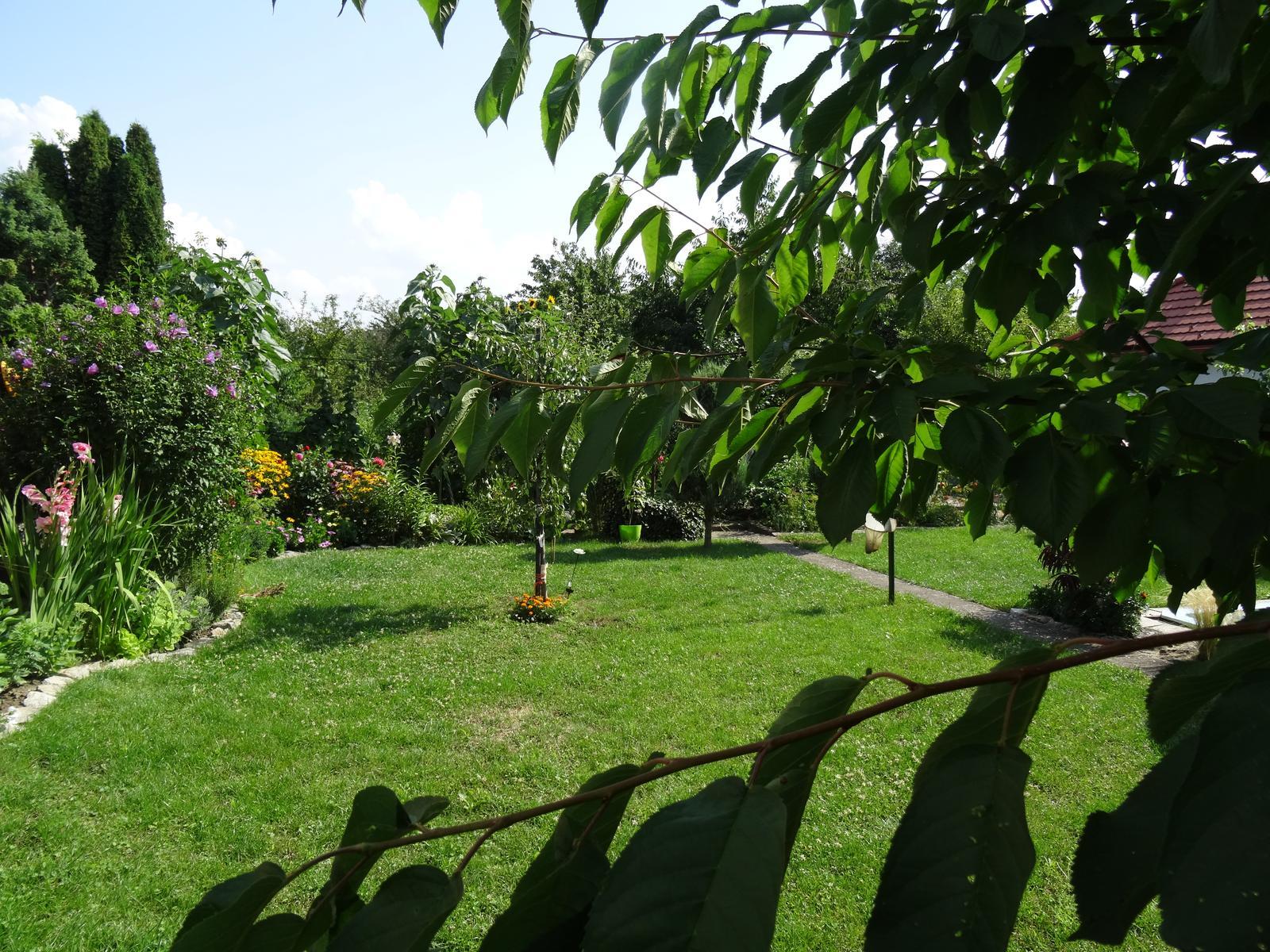 Niečo z našej záhradky - Obrázok č. 25