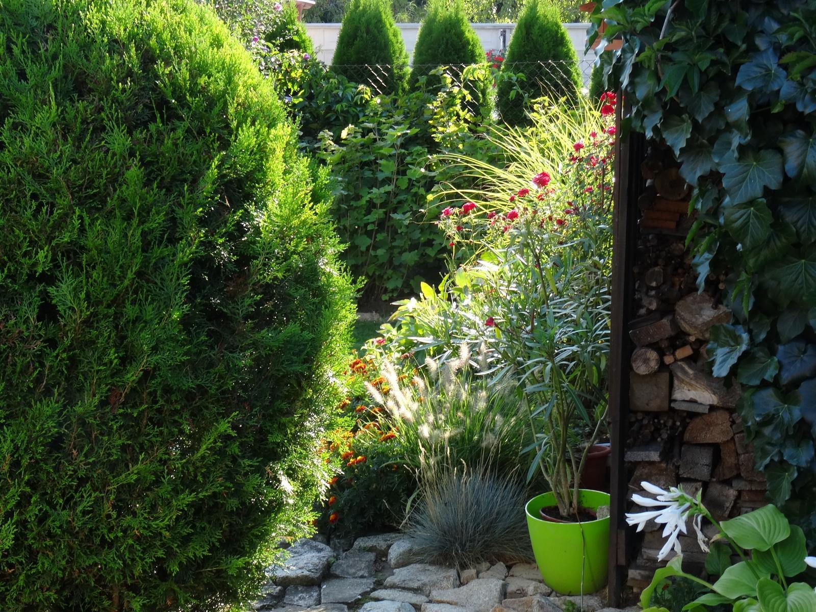 @miselaho Mišelka záhradu budujeme... - Obrázok č. 3