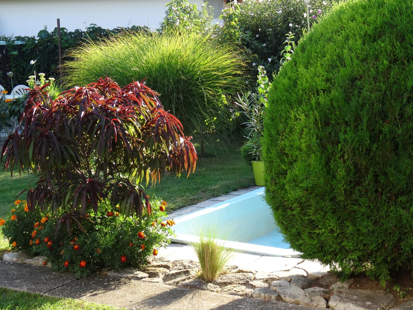 @miselaho Mišelka záhradu budujeme... - Obrázok č. 1