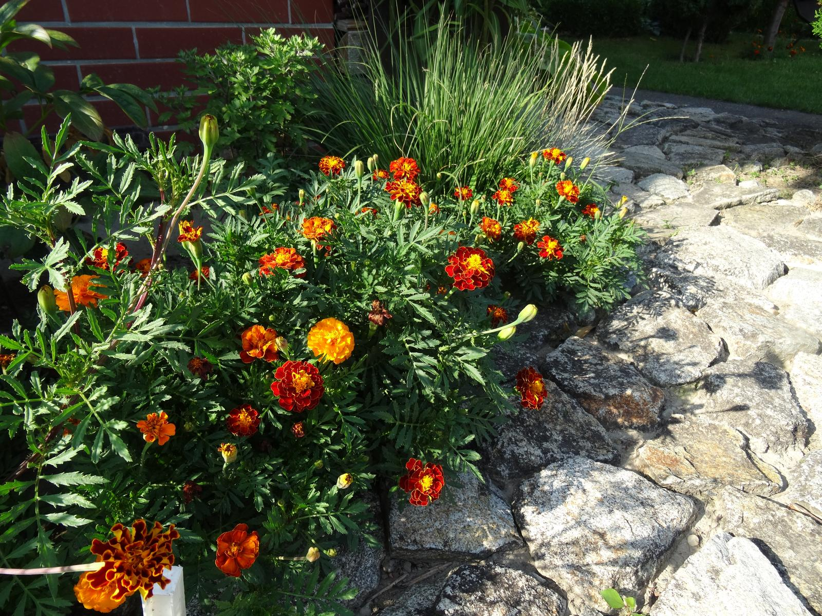 @miselaho Mišelka záhradu budujeme... - Obrázok č. 4
