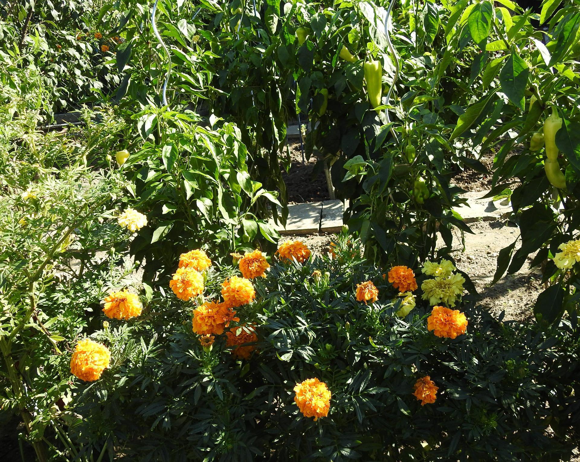 Rok 2018 v mojej-našej záhradke - Obrázok č. 3